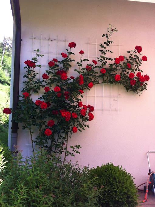 Selon la saison profitez du jardin fleuri