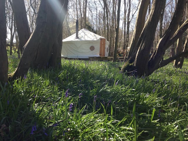 Abada Yurt Retreat in Sussex Bluebell Woods
