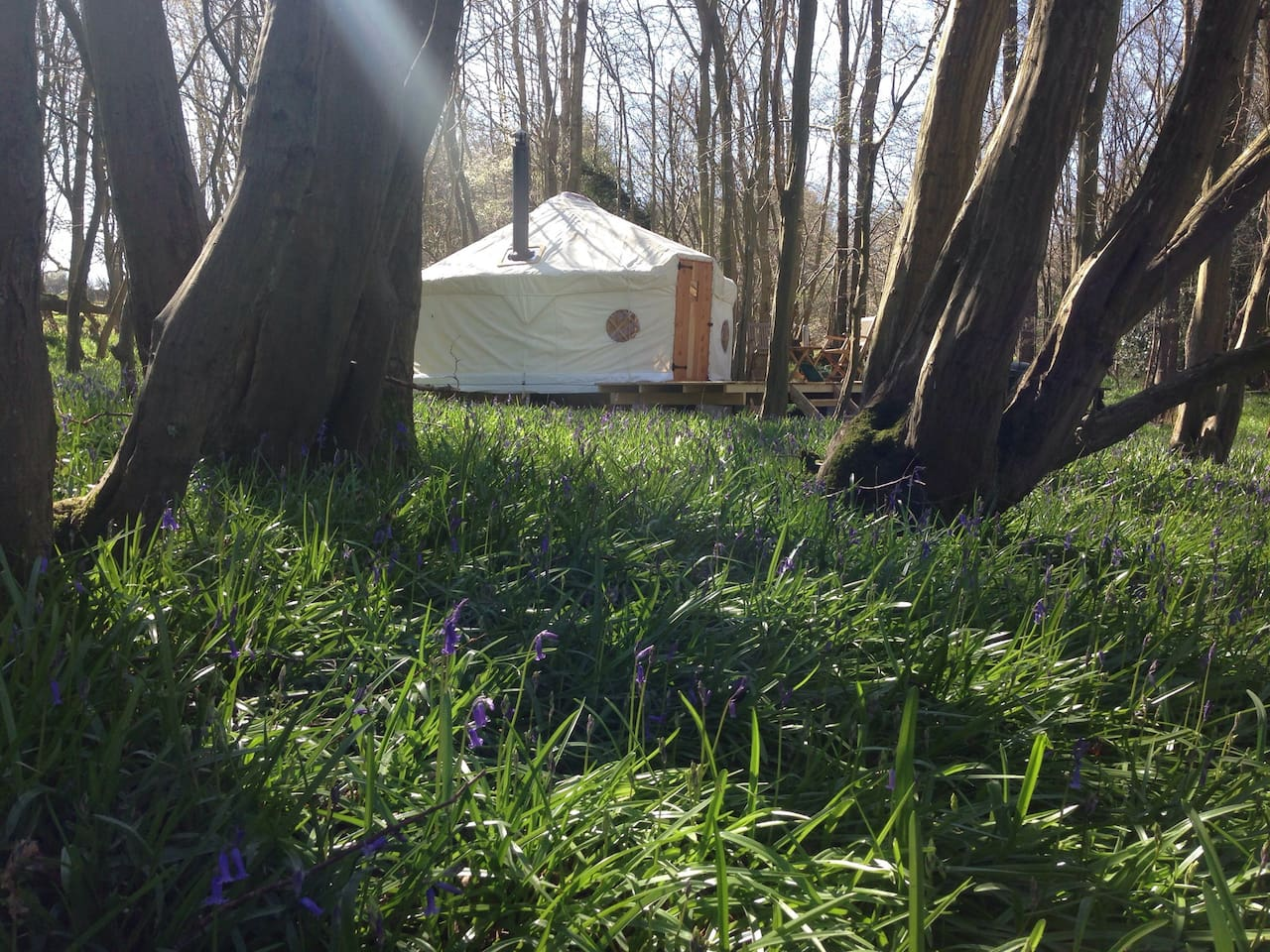 Beautiful setting in bluebell woods