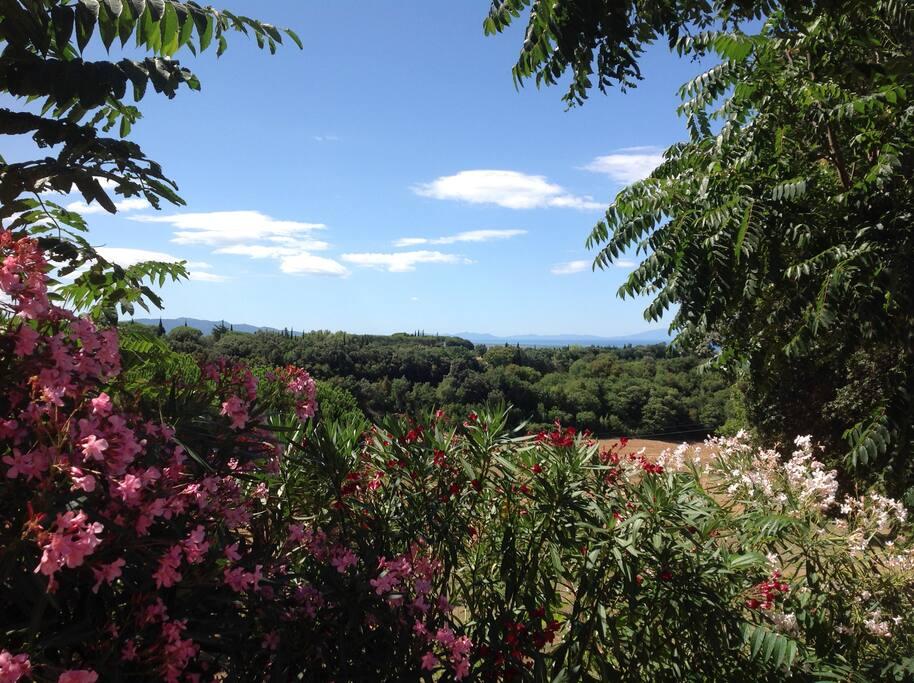 Dal primo piano la splendida vista verso l'isola d'Elba
