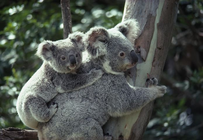 CHAIN of PONDS Serenity - Koala Suite Room 2