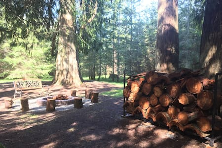 Camping on 14 Acres of Private Old Growth Woods - Olympia - Telt