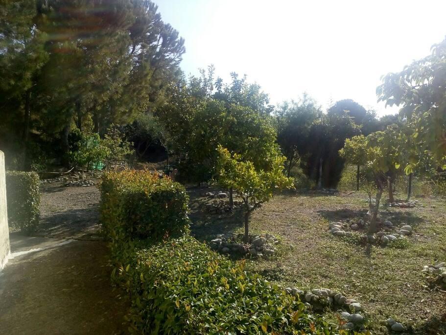 Ο κήπος με Μηλιές πορτοκαλιές..