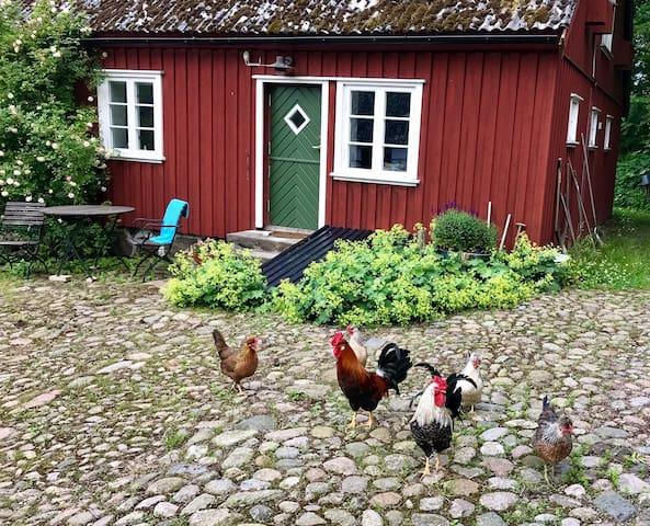 Peaceful living in southern Skåne at Solberga BnB