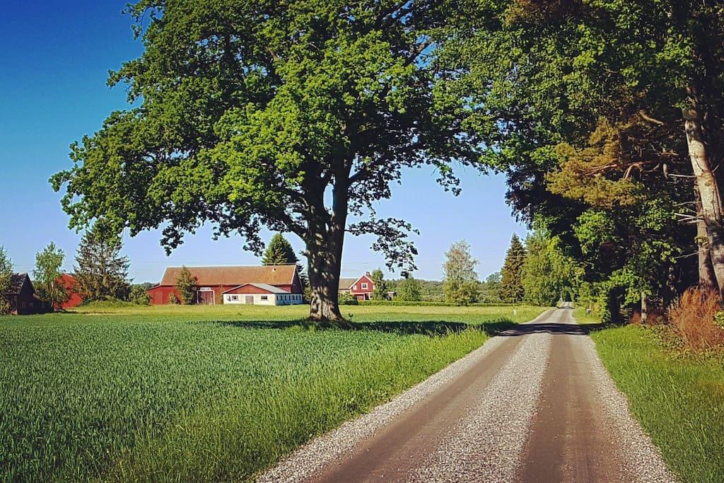 The road to Sandvadet
