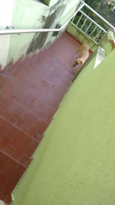 Escada de acesso a casa.