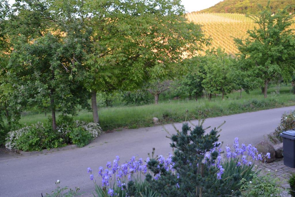 Gem tliche ruhige ferienwohnung in perfekter lage for Offenburg germania