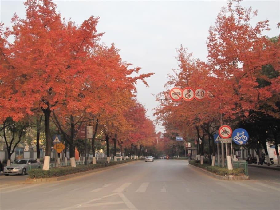 小区门口秋天枫叶