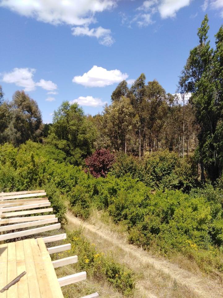Zona de Camping, picnic