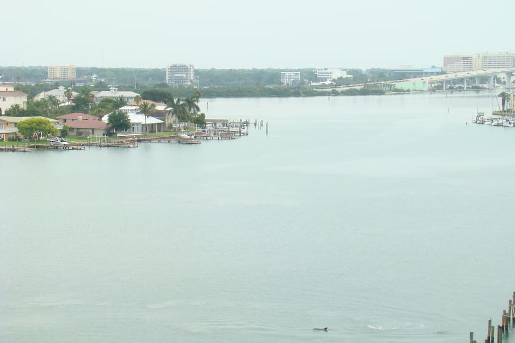 View from the balcony with dolphins swimming