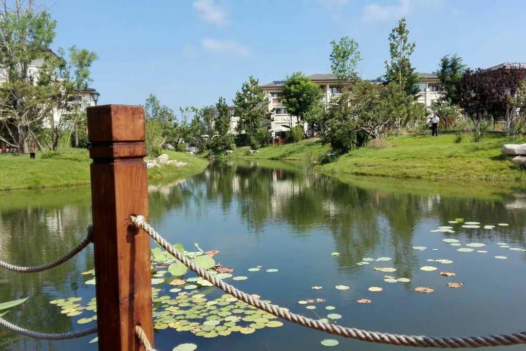 家就在花园里,池塘荷花青蛙小草绿树蛐蛐翠鸟……和谐共生,你能感受到你是他们中的一员。