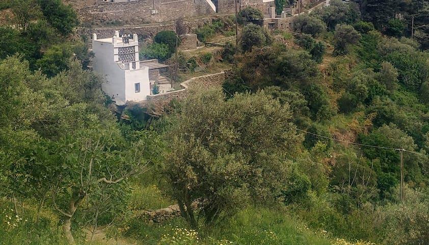 Socrates' pigeon & stone house