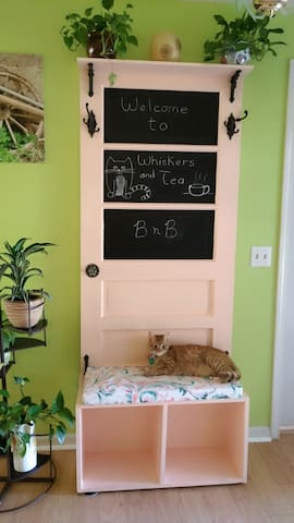 Welcome to Whiskers n Tea BNB! Nabs is waiting to meet you!