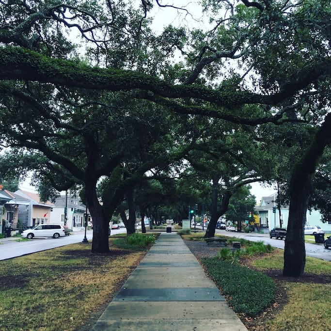 Hang out or stroll down St. Roch Ave. in front of our home and enjoy the shade beneath the beautiful live oaks in the median parkway.