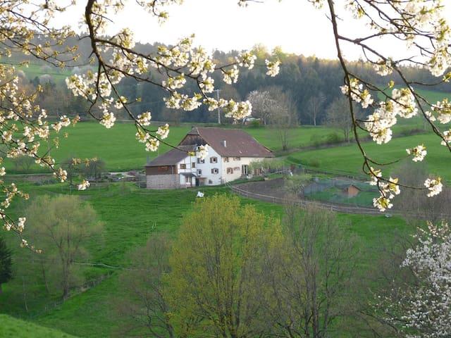 Gailuron Studio centre Alsace Pleine Nature - Sainte-Croix-aux-Mines