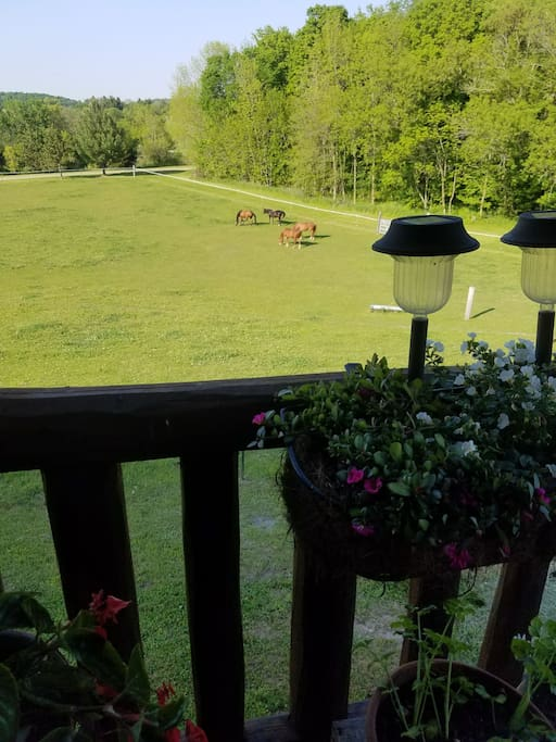 view when sitting on covered porch