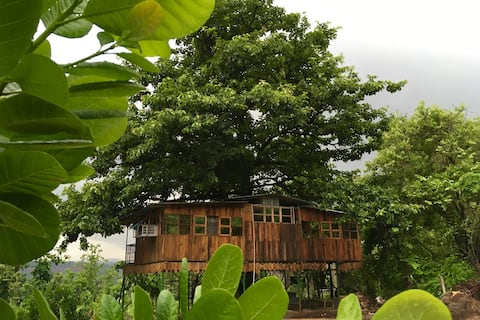 Treehouse : Living with Nature