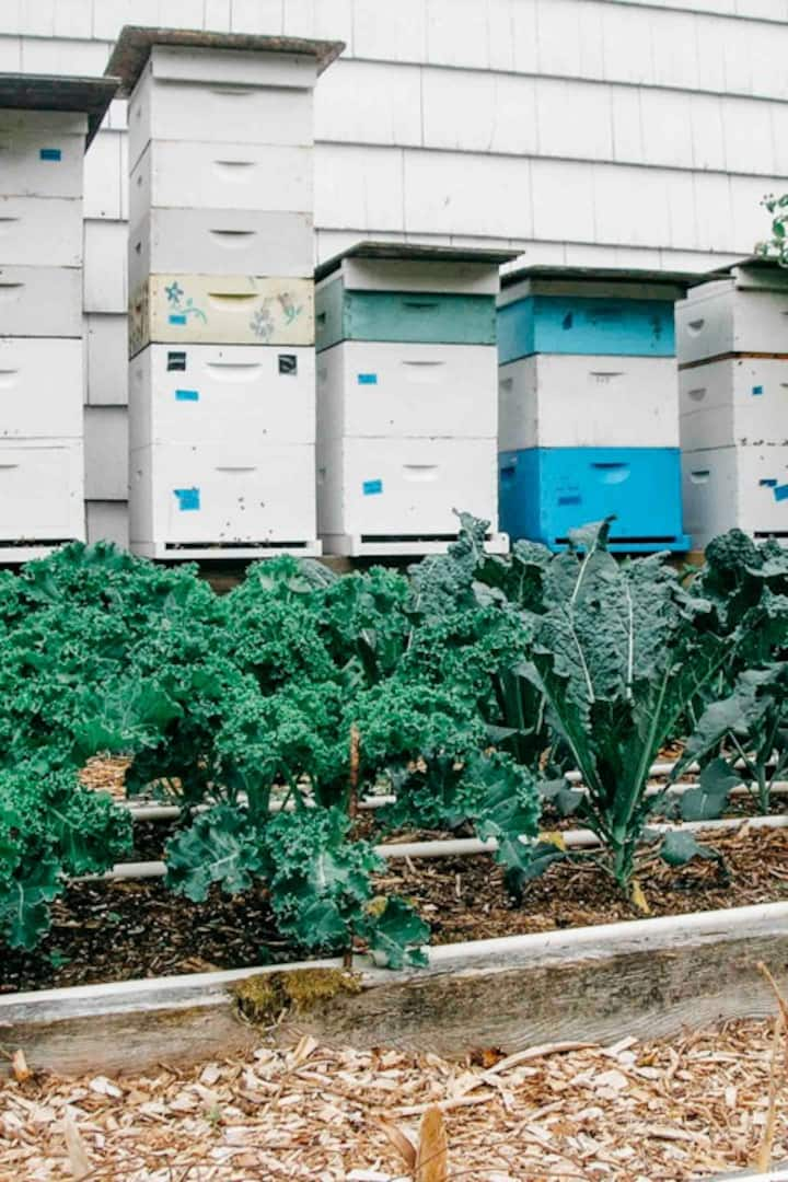 Backyard hives in Portland, Oregon
