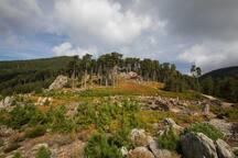 Forêt de Rospa-Sorba (Padula) à 10 minutes