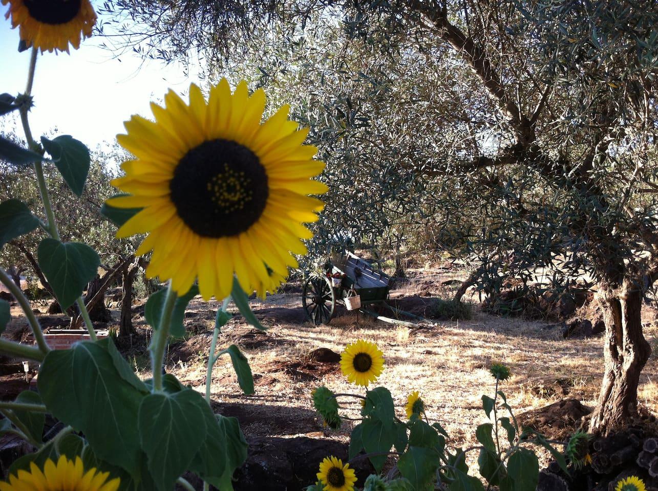 Jardín olivar