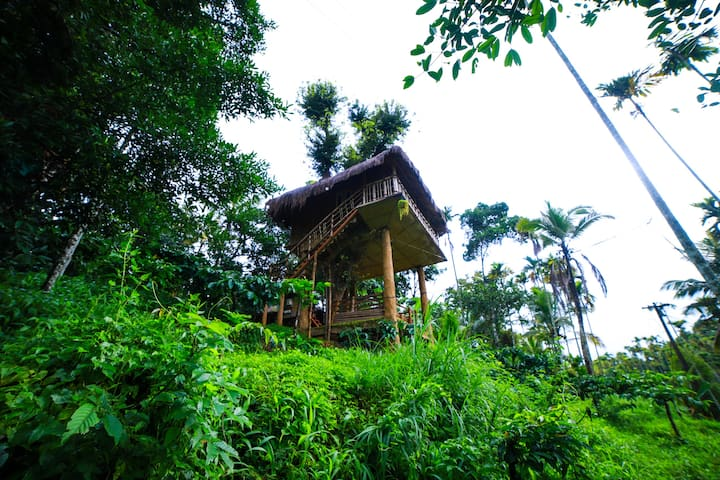 Tree House in Wayanad