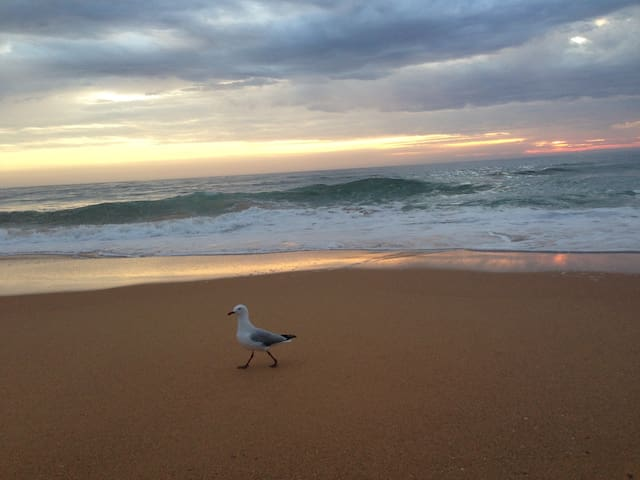 Room Share for 2 in Oceanfront Unit with Pool - Narrabeen - Apartment