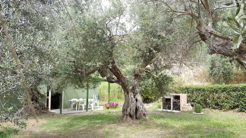 Among the olive trees see the sea!