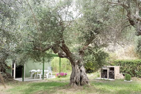 Among the olive trees see the sea! - Silvi - Hus