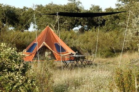 Bubulcus & Bolotas - Rent-a-tent