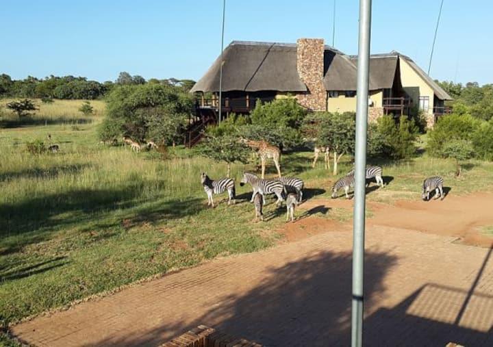 79 Zebula  (13 guests) - Bela Bela - South Africa