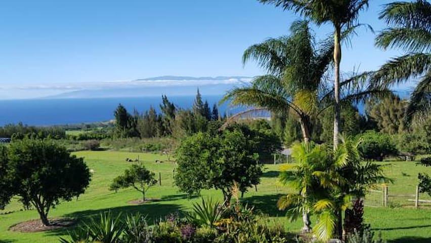 Aloha Cottage Upcountry Epic Views in Kohala