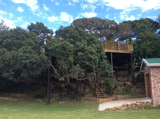 View of Tree House from Ground Level