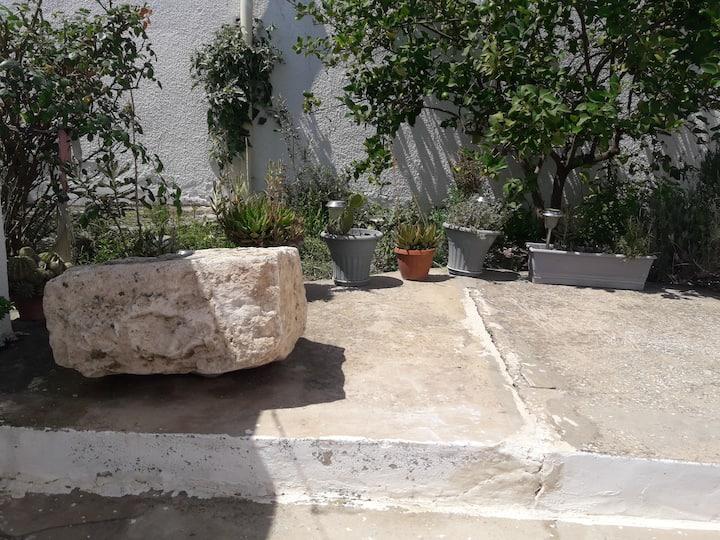 Hafsi's Garden