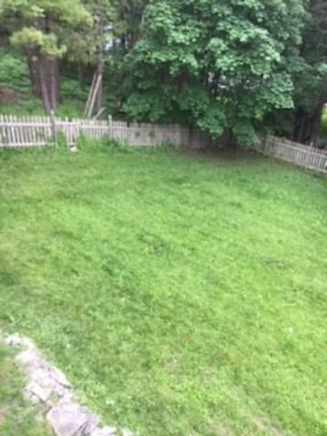 backyard: friendly for your pet!