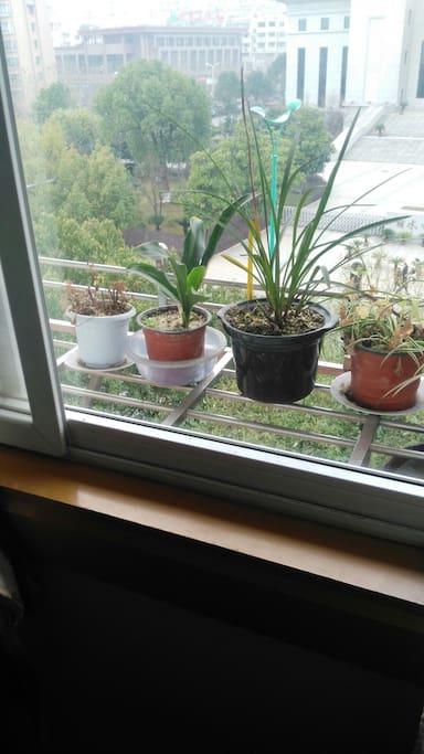 窗台有花草 窗外的风景很好