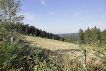 Immediate Surroundings [summer] (<1 km)