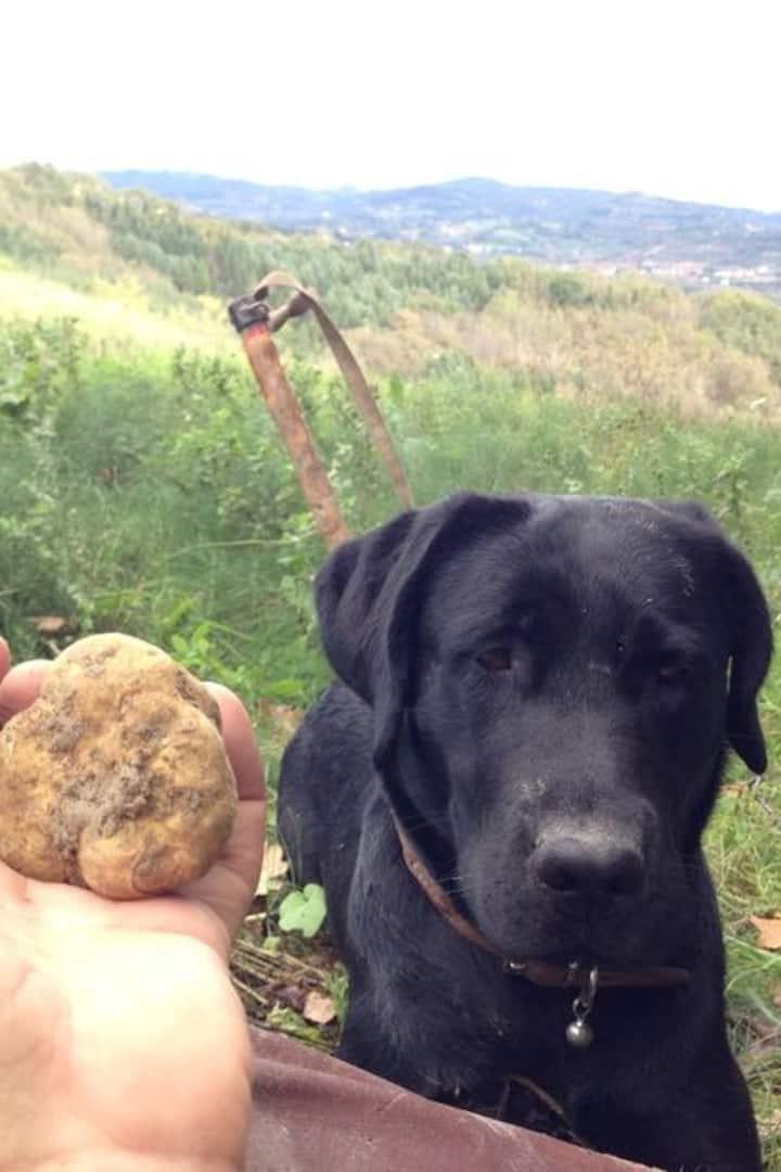 Pepita and White truffles