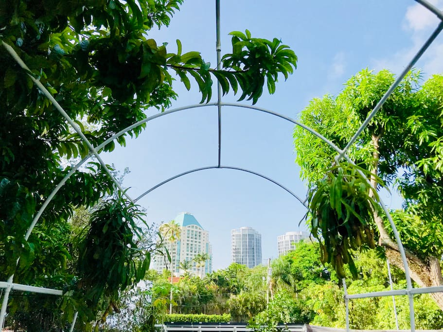 View from our rooftop garden. Guests are welcome to sit and relax and enjoy the view.