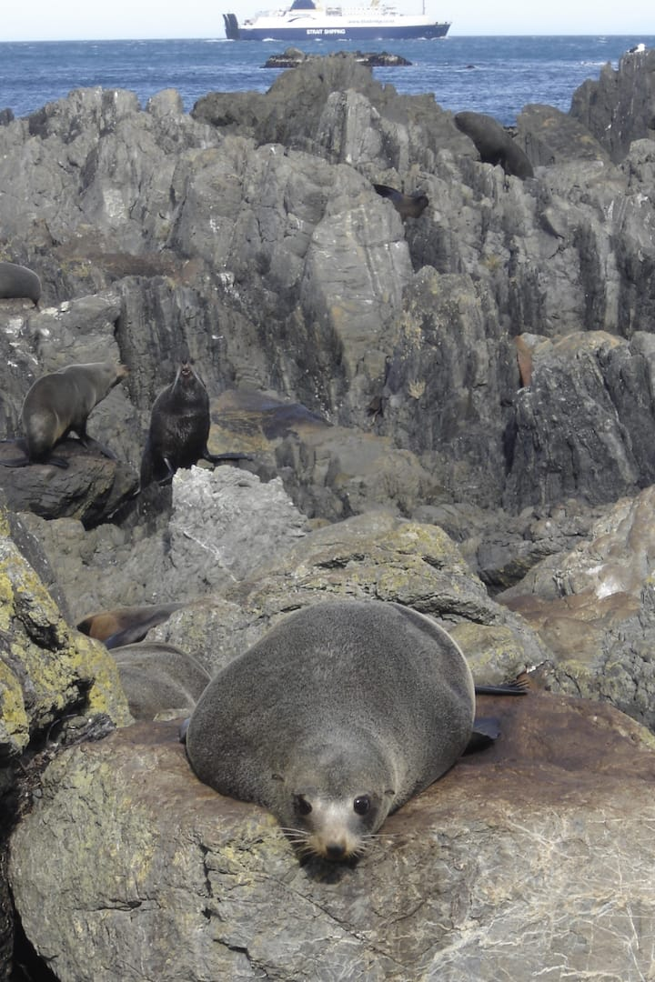 Seals at Sinclair Head