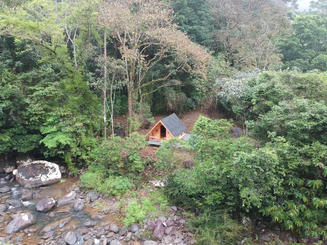 Corona free area: Tiny Cabin lost in the Jungle