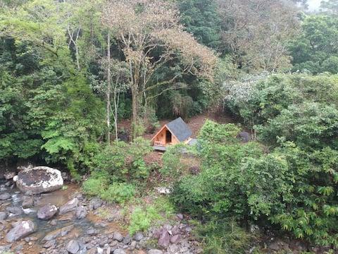 Corona free area: Tiny Cabin lost in the Jungle