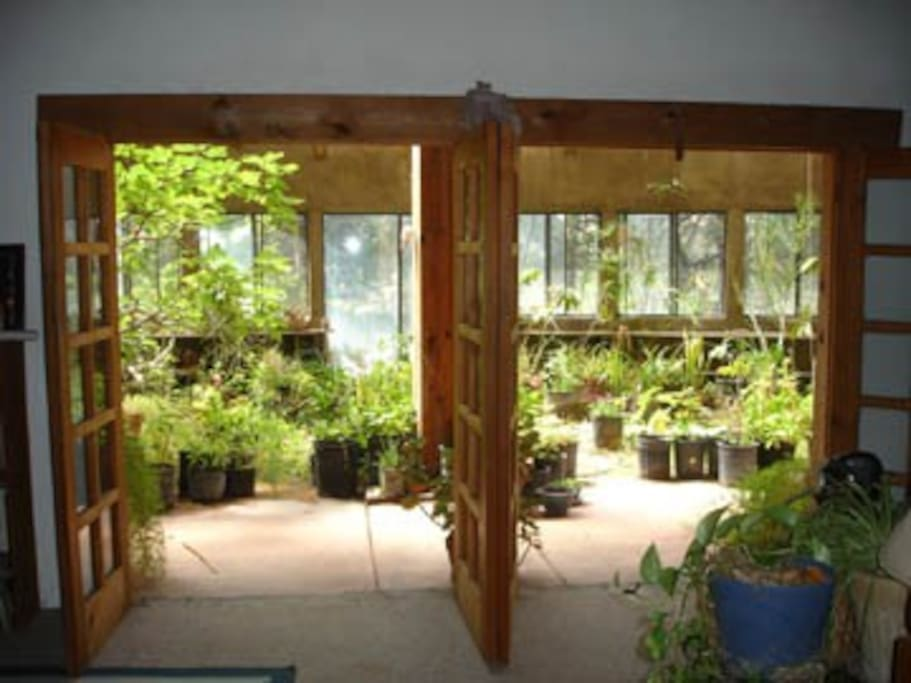 Looking into the greenhouse.