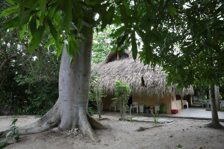 Parte trasera de la casa con recipientes para el reciclaje y el tronco de la gran ceiba