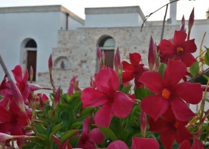 OLIVE GARDEN PUGLIA VACATION - San Vito dei Normanni - House
