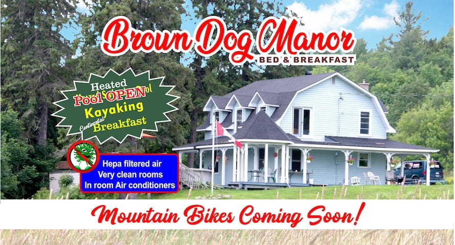 Brown Dog Manor, The Rose Room