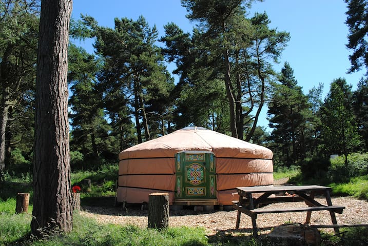Penbedw Yurt 1 - N.Wales Sleeps 6 + yurt 2 sleep 6 - Nannerch - Jurta