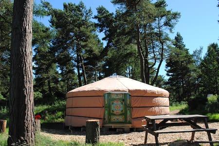 Penbedw Yurt sleeps6/ Yurt 2 (open Mar17, sleeps 6 - Nannerch - Rundzelt
