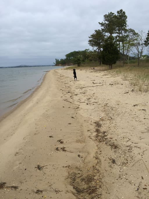 Private beach in front of house (dog not included)