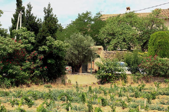 Farm of Provence in the middle of the vineyard