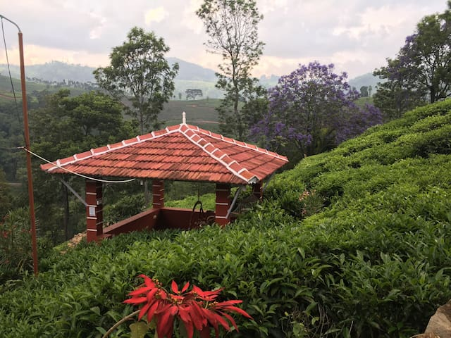 Fuschia Kotagiri, 600 Reviews and counting Cabin 4